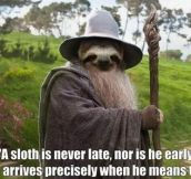 A sloth is never late…