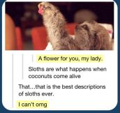 The definition of sloths…