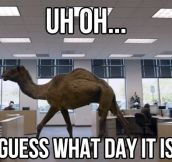 Guess what day it is…
