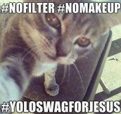 Swag cat…