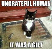 Ungrateful human…