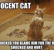 Innocent cat is shocked…