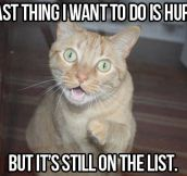 Wiseguy cat…