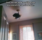 When cats discover new things…