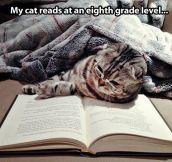 My cat is smart…