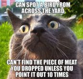 Cat's incoherent logic…