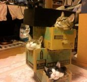 Crazy cat lady Jenga…