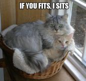 If you fits…