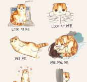 Cat Body Language Guide…