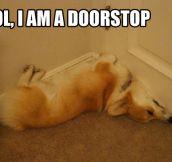 Doorstop dog…