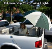 Pet ownership done right…
