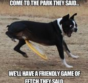 Friendly game of fetch…