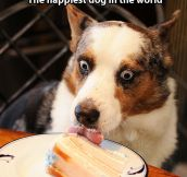 Happiest dog in the world…