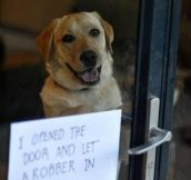 How not to be a dog…
