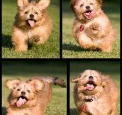 The face of sheer joy…