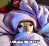 Snug as a bug…
