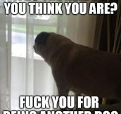 Every time a dog walks by my house…