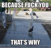 Duck doesn't care…