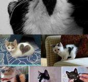 Heart markings on cats…