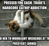 Catnip addiction…