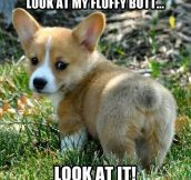 Fluffy butt…