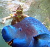 Parrot fish photobomb…