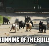Running of the bulls…