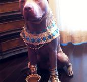 Egyptian dog…