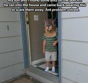 Ant problem solved…