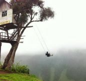 Scary tree swing…