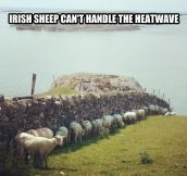 Heatwave in Ireland…