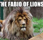 The Fabio of lions…