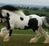 Majestic horse…