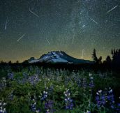 The Perseid meteor shower over Mt. Hood…
