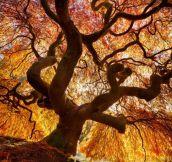 Fire Tree…