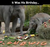 Baby elephant birthday party…