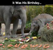 Baby elephant birthday party…
