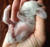 Newborn bunny…
