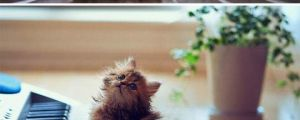 Meet Daisy, the most photogenic kitten of all time…