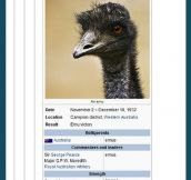 The Emu War…
