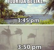 Florida be like…