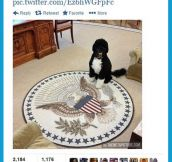 White house dog…