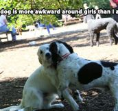 Socially awkward dog…