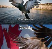 National Birds…
