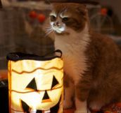 Kitten tells a scary Halloween story…
