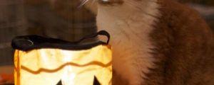 Kitten tells a scary Halloween story…