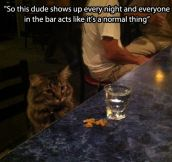 A bar's regular visitor…