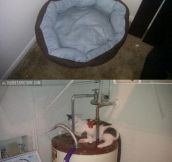 Cat's bed…