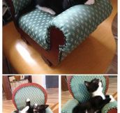 What to do with a kitten-sized chair…