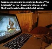 Life as a cat is filled with wonder…